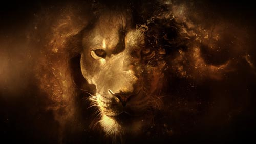 lion_hd_wallpaper.jpg